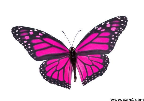 Butterfly3?s=djerunykntopoxknzphgpvrr3lrqo3pq7ifzoemjrig=