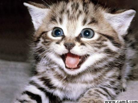 Sweetkittycat?s=yotpgkm8hzlrhkr1uz8uoha7w1tgih04gk6aevdrowc=