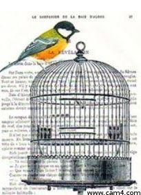 Birdscage?s=yfuogxmoqp2c0ihyaadlzu6ulzmrlnghguymhuihkh0=